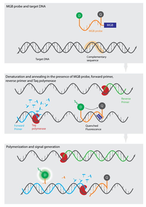 Gene Expression Analysis (3)
